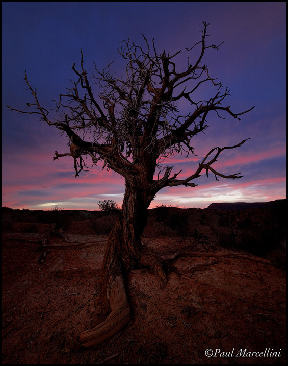 An interesting old juniper, I faintly light painted it with an LED in th esame direction as the full moon. I wanted it too look very natural, just giving the moonlight a little help basically.