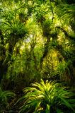 Fakahatchee Strand Preserve State Park, Florida, north america, jungle, epiphyte, nature, photography,