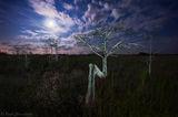 Tree of the Spirits