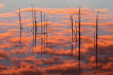 Everglades National Park, Florida, eleocharis, sunrise, reflection, nature, photography, florida national parks