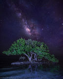 Islamorada, Florida Keys, Florida, mangrove, milky way, stars, nature, photography, anne's beach