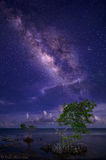 milky way, red mangrove, summer, florida keys, florida, nature, photography