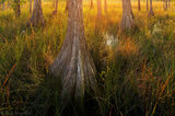 cypress, Big Cypress National Preserve, Florida, nature, photography