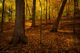 Radnor Lake State Park, Nashville, Tennessee, fall, morning