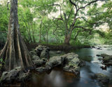 hillsborough river, florida, south florida, nature, photography