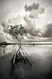 storm, mangrove, big pine key, florida keys, florida, keys, south florida, nature, photography