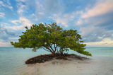 sunrise, mangrove, Islamorada, Florida Keys, FL, keys, florida, south florida, nature, photography