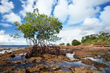 mangrove, morning, Big Pine Key, Florida Keys, Florida, keys, south florida, nature, photography