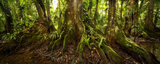 belize, kaway trees, jungle