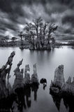 chipola river, dead lakes, florida, cypress, north florida, nature, photography