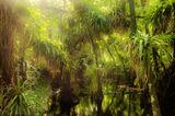 Fakahatchee, Strand Preserve State Park, guzmania monostachia, epiphyte, bromeliad, Fakahatchee Strand Preserve State Pa, florida, south florida, nature, photography