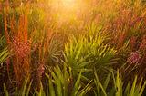 Kissimmee Prairie Preserve State Park, FL, sunrise, florida, nature, photography