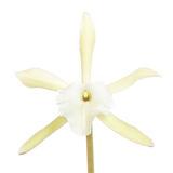 flower, tropical, flora