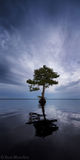 Blue Cypress Lake, Indian River County, Florida, panorama, blue, south florida, nature, photography