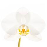 flower, tropical, flora, phalaenopsis