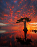 cypress, Blue Cypress Lake, Indian River County, FL, sunrise, florida, south florida, nature, photography
