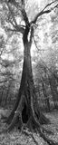 oak, Suwannee River State Park, florida, nature, photography