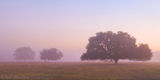 morning, fog, oaks, venus, florida, south florida, nature, photography