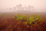 foggy, pinelands, everglades, Florida, nature, photography, florida national parks
