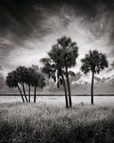 Myakka River State Park, Florida, sabal palms, south florida, nature, photography