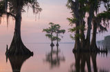 louisiana, cypress, lake maurepas