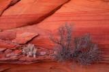 Coyote Buttes South, Vermilion Cliffs National Monument, Arizona
