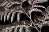 bw, monochrome, plants, flora