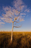 cloud, bald cypress, taxodium distichum, everglades, Florida, nature, photography, florida national parks