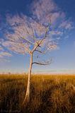 cloud, bald cypress, taxodium distichum, everglades, Florida, nature, photography, florida national parks