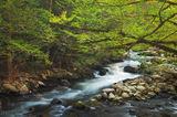 Great Smoky Mountains National Park, Tennessee, spring, smokies
