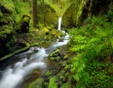 columbia, river, gorge, waterfall, fern
