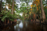 Loxahatchee River, Florida, morning, south florida, jupiter, nature, photography