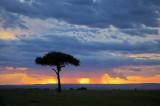 acacia, sunset, storm, masai mara, kenya, africa