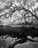 Hillsborough River State Park, Florida, oak, infrared
