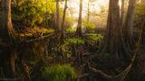 Taylor County, Florida, Zephyr Lilies, Zephyranthes atamasca