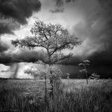 Everglades National Park, Florida, cypress, storm