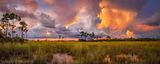 pineland, pine rockland, everglades national park, florida, landscape
