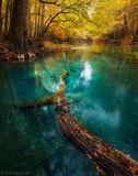 chipola river, spring, fall, freshwater spring