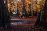 Suwannee Valley, Florida, fall, cypress