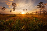 pinelands, Everglades National Park, Florida
