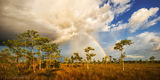 Big Cypress National Preserve, Florida, cypress, rainbow, storm