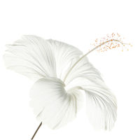 White Hibiscus print