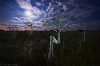 Tree of the Spirits print