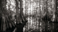 Gator Hook Panorama print