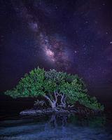 Anne's Beach Milky Way print