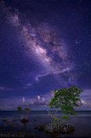 Milky Way and Mangroves print