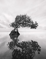 Monochrome Mangrove Study print