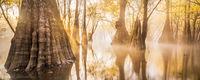 Swamp Gold print