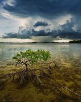 Storm off Summerland Key print