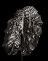 Alocasia Leaf 1 print